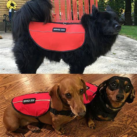 service vest for dogs service vest usa service dogs