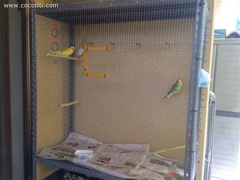 gabbia pappagalli fai da te gabbia fatta in casa cocorite e pappagallini ondulati