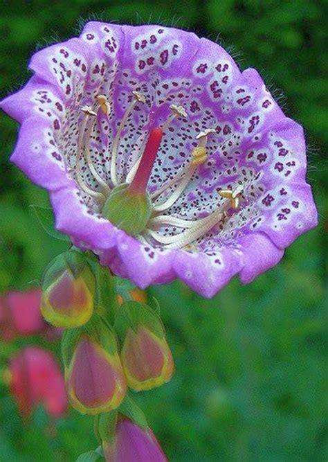 imagenes de rosas increibles imagenes de flores increibles