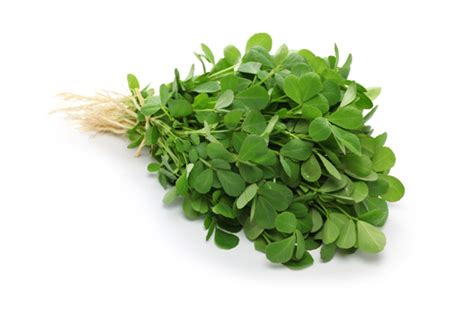 Its All Fenugreek To Me Theitlistscom by Fenugreek Uses Benefits Recipes Cultivator