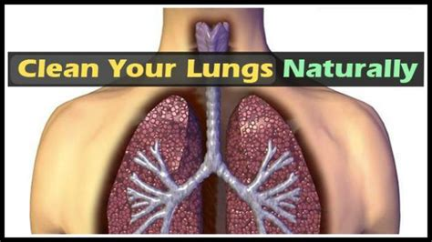 How Do You Detox Your From Nicotine by Here S How You Can Clean Your Lungs Easily In Just 3 Days
