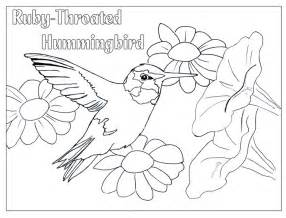 hummingbird coloring pages hummingbird coloring pages to and print for free