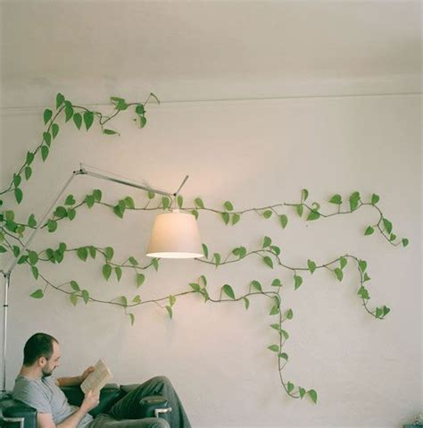 climbing houseplants to grow indoors 1000 images about ideas for our new office on pinterest
