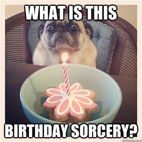 Birthday Pug Meme - birthday pug memes quickmeme