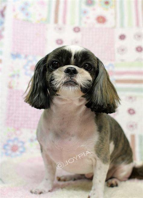 shih tzu puppy grooming styles shih tzu grooming styles pet grooming the the bad the a new