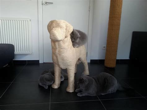 dog scratching couch a dog shaped scratching post gives cats sweet revenge