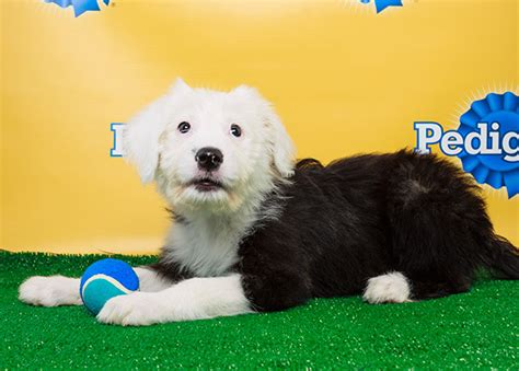 when does the puppy bowl start sit start puppy bowl advice our expert opinions sbnation