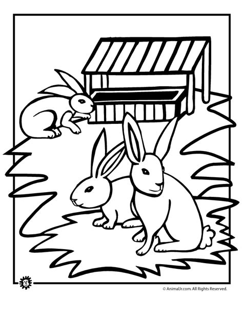 rabbit hutch coloring page rabbit cage coloring page coloring pages
