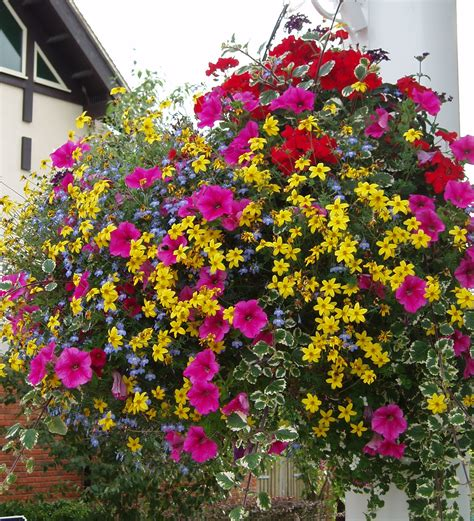six effects of plant colour how does it make you feel perfect plants