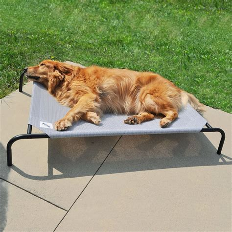 elevated dog bed coolaroo steel framed elevated pet bed grey large