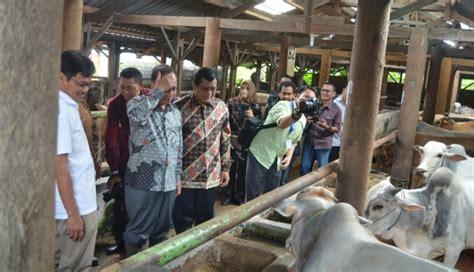 Bibit Sapi Klaten Universitas Gadjah Mada Indonesia Bisa Swasembada Daging Sapi Dalam 10 Tahun Mendatang