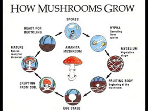 what you need to about growing mushrooms growing