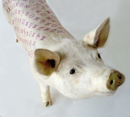 tattooed pigs if it s hip it s here archives inked oinkers tattooed