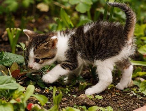 tenere lontano i gatti dal giardino piante anti gatto rimedi