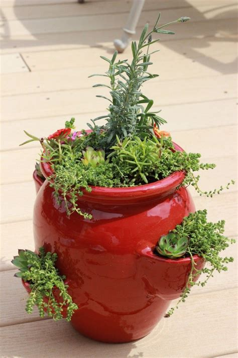 succulent perennial strawberry pot momcrieff