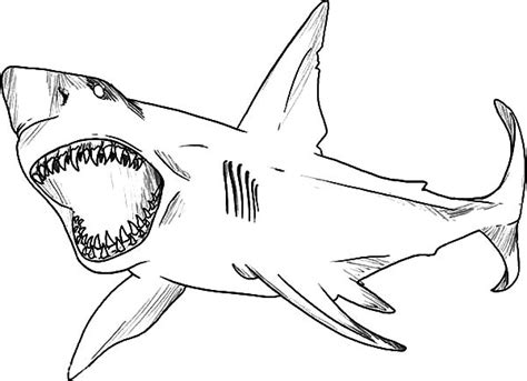 jaws the shark coloring pages coloring pages