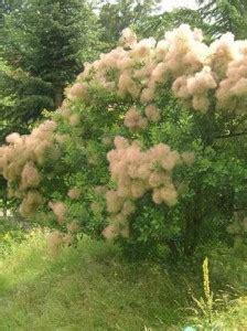 Immergr Ne Pflanzen F R Sonnige Standorte 224 by Pflanzen F 252 R Dachterrasse Gesucht Welche Sorten Sind