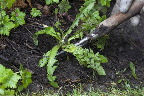 how to get rid of weeds in flower beds get rid of weeds how to get rid of weeds in flower beds