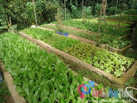 small farming business ideas organic agriculture a booming business in the philippines