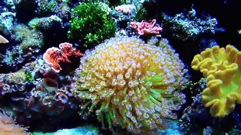 Little Home Decor by Worlds Best Saltwater Aquarium Youtube