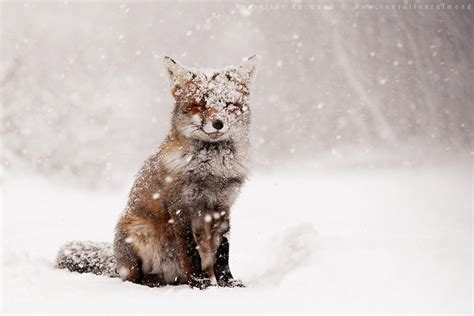 animals in the winter 19 magical photos of animals in winter bored panda