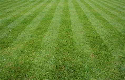 tricks to getting your lawn green again greenskeeper