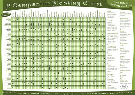 1000 ideas about companion planting guide on pinterest companion planting chart gardening pinterest