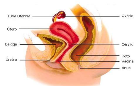 vestibulo feminino aula de anatomia sistema genital feminino