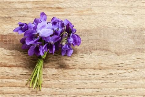 mammola fiore viola mammola come coltivarla e usarla in fitoterapia