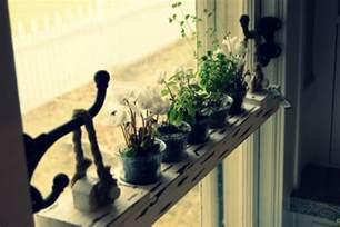 Indoor Window Sill Plant Shelf Diy 20 Ideas Of Window Herb Garden For Your Kitchen