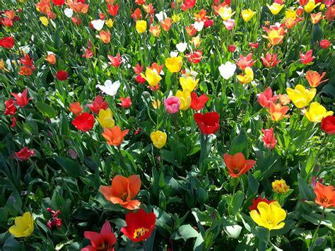 Fleurs De Printemps by Images Gratuites Fleur Printemps Color 233 Parterre De