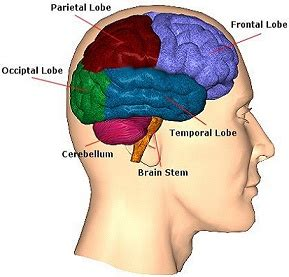 ode to the brain positiveneuro culture and personality psychological anthropology