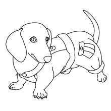coloring pages of maltese puppies dog 3 01 qq5 2qm jpg 220 215 220 chien pinterest