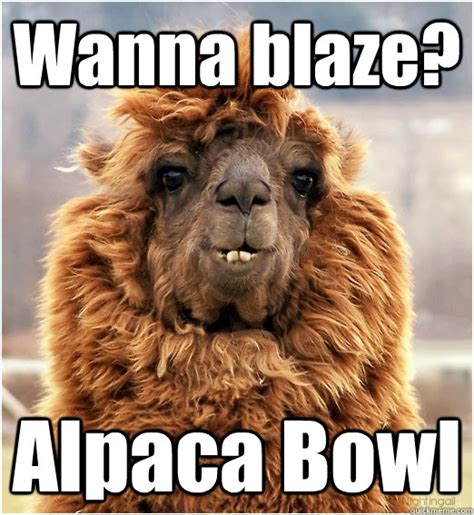 wanna blaze alpaca bowl misc quickmeme