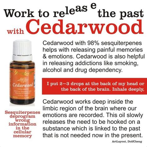 Youngliving Essential Cedarwood 15ml the world s catalog of ideas