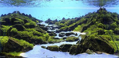 Layout Aquascape The Majestic Aquariums Of The Tokyo Aquascape Union
