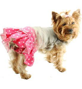 diapers for yorkies how this has a skirt coco being fancy i m adding a skirt when i