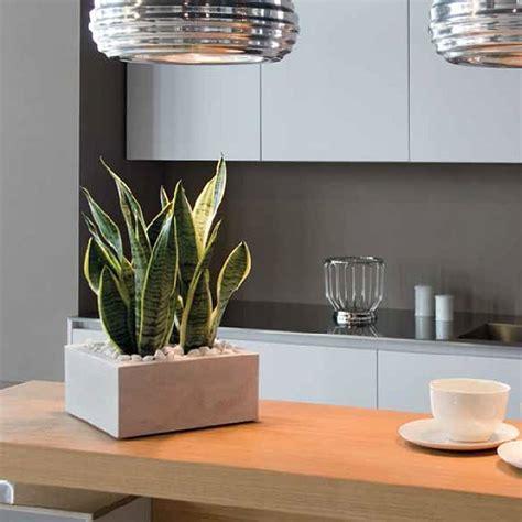vasi per interni moderni vaso moderno da esterno e interno minos nicoli