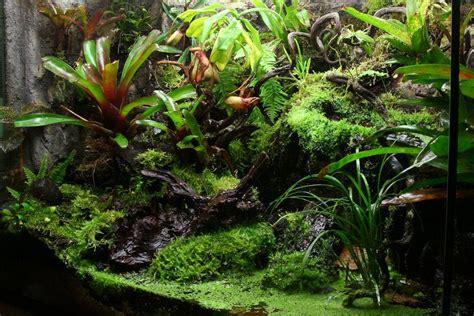 build  rainforest terrarium arcamazon alliance