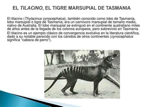 el tigre y el le 243 n pueden ser los m 225 s fuertes pero el ppt clasificaci 211 n de los seres vivos powerpoint