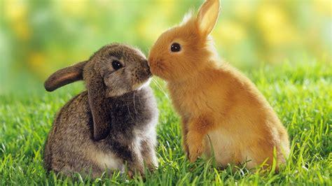 imagenes de animales enamorados conejos enamorados im 225 genes y fotos
