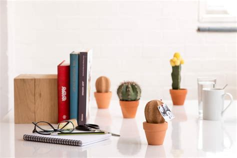 desk cactus cork cactus desk tidy by all things brighton beautiful