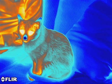 thermal imagery thermal imagery reveals a compelling need for wintertime