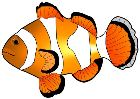 fish clipart fish clipart pencil and in color fish clipart