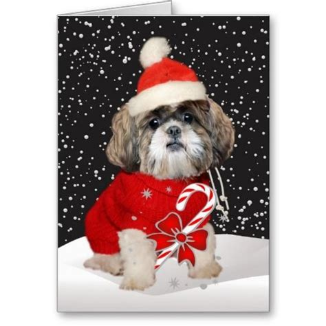 shih tzu cards 22 best shih tzu cards images on cards shih tzu and