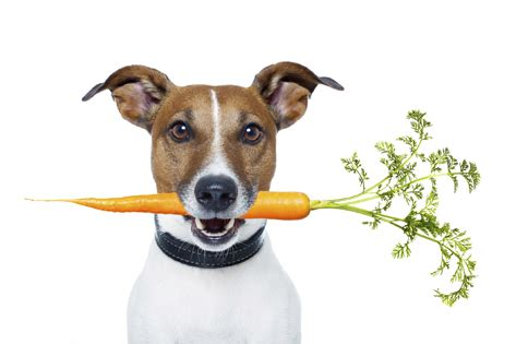 dogs eat carrots do carrots really improve vision for you your petmd