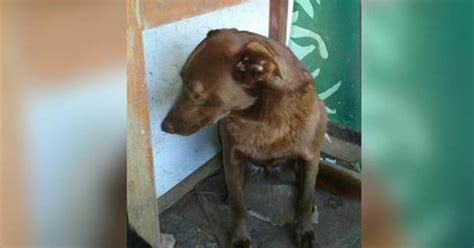 dog suddenly wants to be alone depressed dog sits alone at the shelter for 2 yrs then