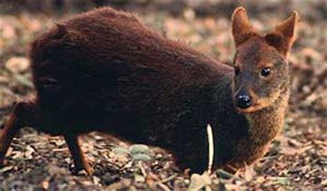fotos animales zona sur de chile leslitahh fauna chilena de la zona sur