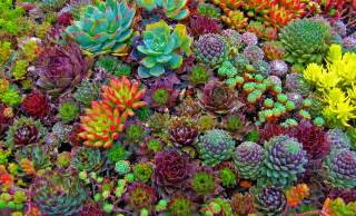 Plants That Don T Need Natural Light Everything You Need To Know About Succulent Maintenance