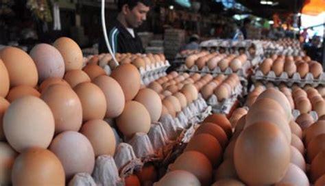Jual Teropong Telur kunci sukses bisnis berjualan telur teropong bisnis